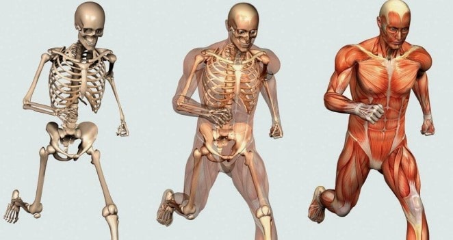 Composite material human body